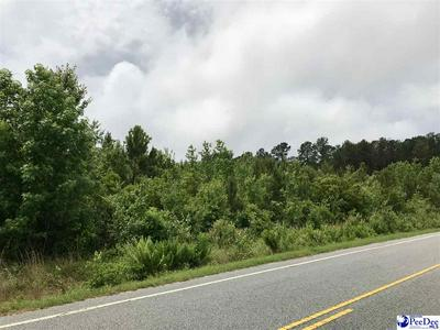 TBD TURNER GATE ROAD, Pamplico, SC 29583 - Photo 2