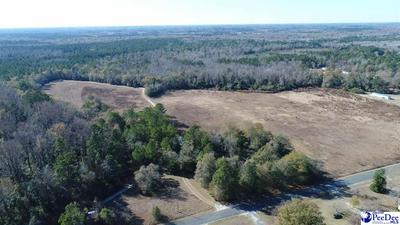 418.97 ACRES RABBIT ISLAND ROAD, Nichols, SC 29581 - Photo 2