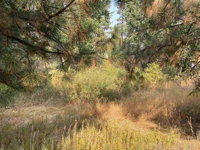 619 BEAR VALLEY RD, Loyalton, CA 96118 - Photo 1