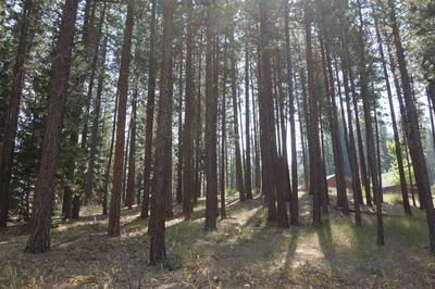 63 SMITH CREEK RD, Graeagle, CA 96103 - Photo 2