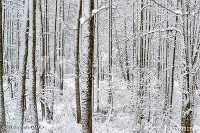 407 PINE TREE ROAD, Albrightsville, PA 18210 - Photo 2