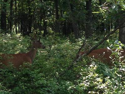 414 YEATS CT # 415, Albrightsville, PA 18210 - Photo 1