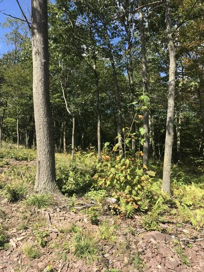 LOT 78 SUMMIT WOODS, Moscow, PA 18444 - Photo 2