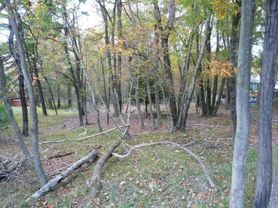 LOT 116 MOUNTAIN RD, Albrightsville, PA 18610 - Photo 2