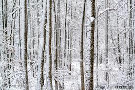 407 PINE TREE ROAD, Albrightsville, PA 18210 - Photo 1