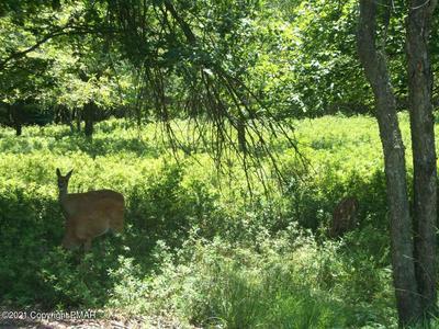 EV1652 MACCAULEY RD, Albrightsville, PA 18210 - Photo 1