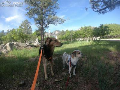 4635 BRADFORD HTS, Colorado Springs, CO 80906 - Photo 2