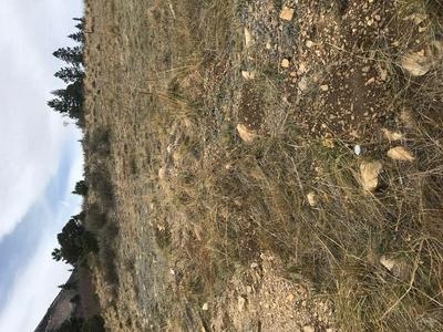 53 TRES VALLES WEST, La Veta, CO 81055 - Photo 2
