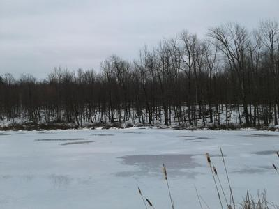HICKORY HILL RD, Starrucca, PA 18462 - Photo 2