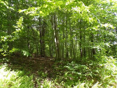 DOZY RD, PLEASANT MOUNT, PA 18453 - Photo 2