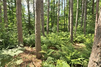 LOT 4 HUNTER LAKE ROAD, Winter, WI 54896 - Photo 2