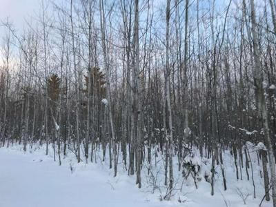 NEAR LENAWEE ROAD, Herbster, WI 54844 - Photo 1