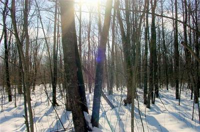 60 ACRES ON IRVINE DRIVE, Ojibwa, WI 54862 - Photo 2