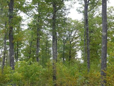 NEAR HALF MILE ROAD, Herbster, WI 54844 - Photo 1