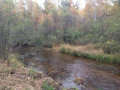 0F FLAT LAKE ROAD, Gordon, WI 54838 - Photo 1