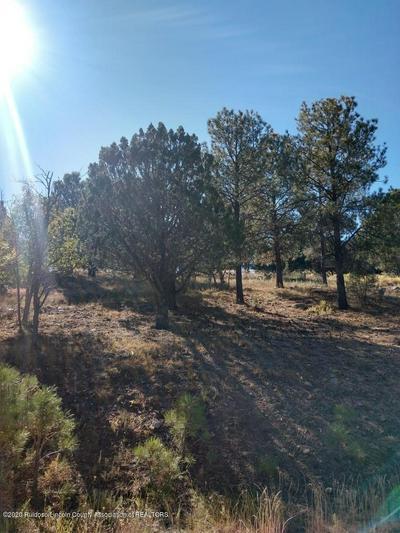 L46 SAWMILL CANYON ROAD, Alto, NM 88312 - Photo 1