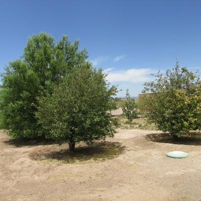204 DRIFTER RD, Carrizozo, NM 88301 - Photo 2