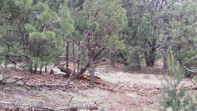 271 ENCHANTED FOREST LOOP, Alto, NM 88312 - Photo 2