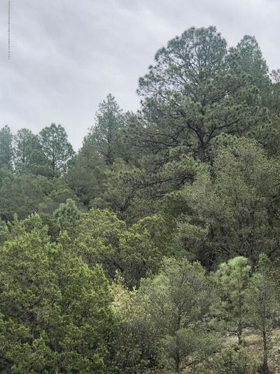 TRACT 1 LITTLE CREEK ROAD, Alto, NM 88312 - Photo 2