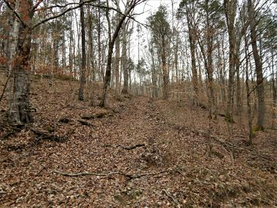 0 BEECH CREEK ROAD, Waynesboro, TN 38485 - Photo 2