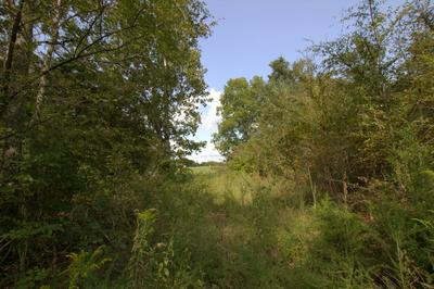 0 SCOTT BRANCH RD, Hampshire, TN 38461 - Photo 1