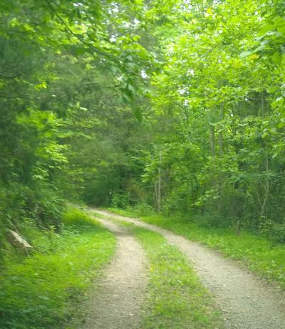 3343 SYCAMORE CREEK RD, Woodbury, TN 37190 - Photo 2