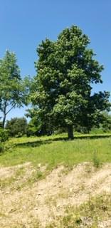 9899 OLD HIGHWAY 52, Westmoreland, TN 37186 - Photo 2