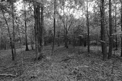 0 NEW KIMMINS RD, Hohenwald, TN 38462 - Photo 1
