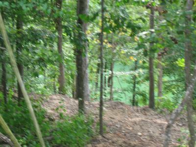 0 RIDGEVIEW RUN, Lynchburg, TN 37352 - Photo 2