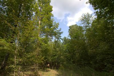 0 SCOTT BRANCH RD, Hampshire, TN 38461 - Photo 2