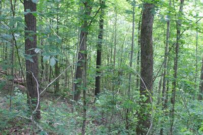 0 SKAGGS BRANCH RD, Whitleyville, TN 38588 - Photo 2