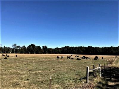 0 BORDERLINE RD, Flintville, TN 37335 - Photo 2