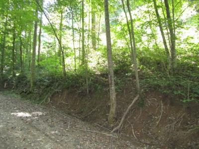 1 .17AC AUSTIN LAKE RD, Baxter, TN 38544 - Photo 2