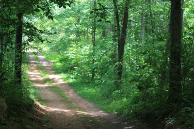 0 SKAGGS BRANCH RD, Whitleyville, TN 38588 - Photo 1
