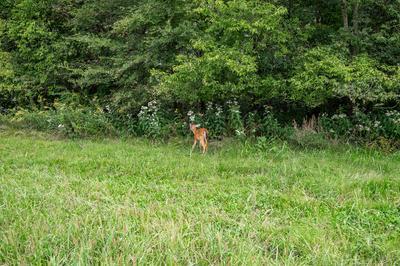 0 KARO ROAD, Christiana, TN 37037 - Photo 2