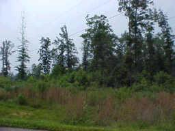 0 FOX HAVEN DR, Nunnelly, TN 37137 - Photo 2