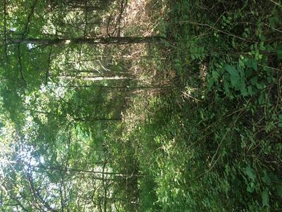 0 DYER BRANCH RD, Gordonsville, TN 38563 - Photo 2