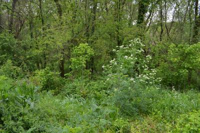 0 JOHNSON HL RD, Mount Pleasant, TN 38474 - Photo 2