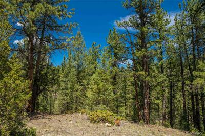 14433 S ELK CREEK RD LOT 3, Pine, CO 80470 - Photo 2
