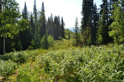 BEAVER CANYON, Clark, CO 80428 - Photo 2