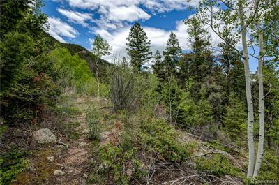 9005 MOUNTAIN RD, Cascade, CO 80809 - Photo 1
