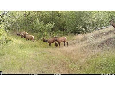0 RIDDLE BYPASS RD, Riddle, OR 97469 - Photo 2