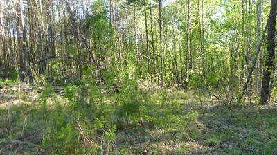 TRACT 1 DUSTY LN, Martinsville, VA 24112 - Photo 1