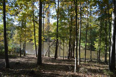 LOT 2 FOREST RD, Goode, VA 24556 - Photo 2