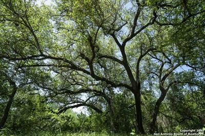 45 +/- ACRES S SH 16, Jourdanton, TX 78026 - Photo 2