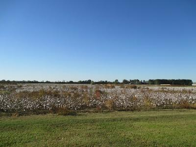 LOT D AMMONS RD, Sumter, SC 29153 - Photo 2