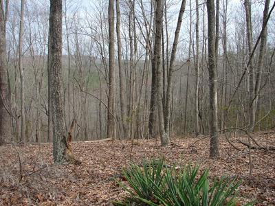 LIME PLANT ROAD, Appomattox, VA 24522 - Photo 2