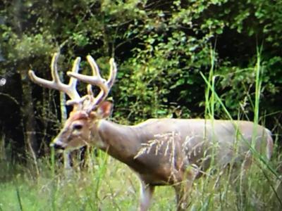 AC BILL HANDY RD, Columbia, KY 42728 - Photo 2