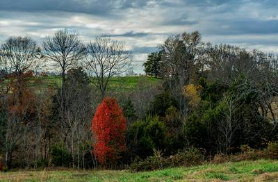 AC MARSHAL RIDGE RD, Greensburg, KY 42743 - Photo 1