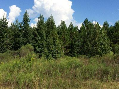 0 MARY MCCLENDON RD, Ozark, AL 36360 - Photo 1